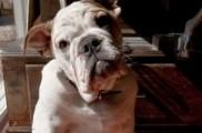 Img perros epilepsias ataques genes razas mascotas animales enfermedades salud listado