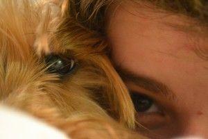 Img perros escarbar comportamiento ocultar alimentos animales art