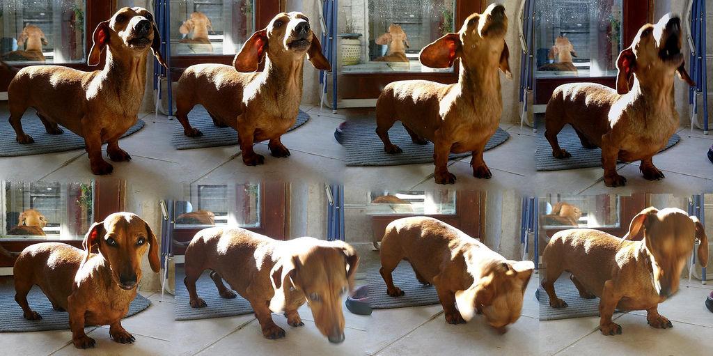 Img perros estornudos