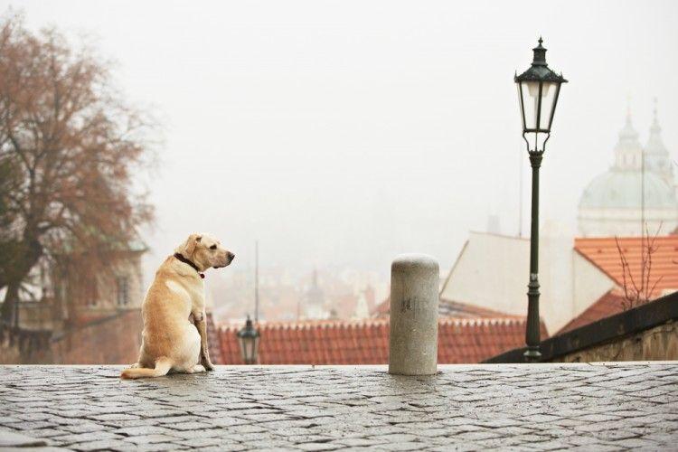 Img perros estr os ciudad2 art