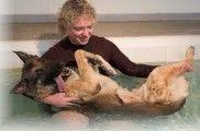 img_perros fisioterapia rehabilitaciones masajes operaciones animales mascotas listado