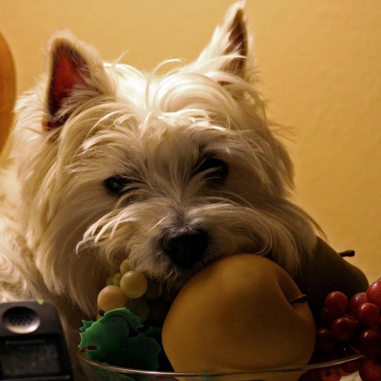 Img perros frutas zumos helados recetas art