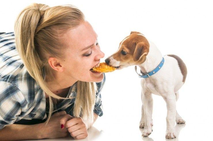 Img perros galletas caseras recetas 2 art