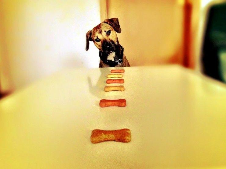 Img perros galletas caseras recetas 3 art