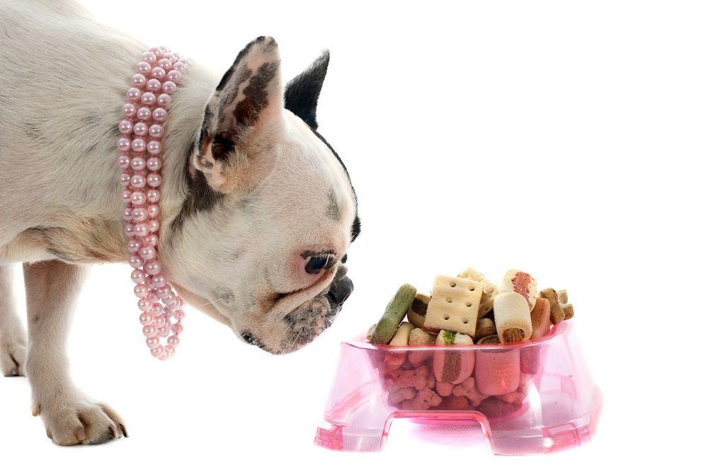 Img perros galletas premios recetas