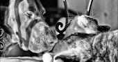 img_perros gatos adoptar