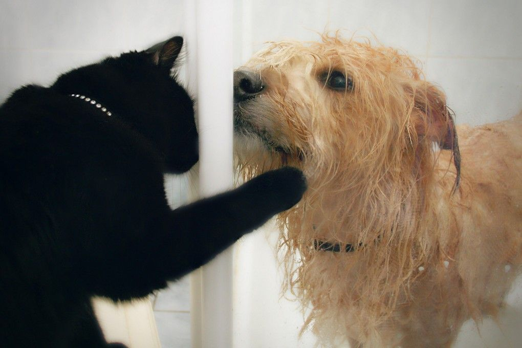 Img perros gatos alimentacion hd