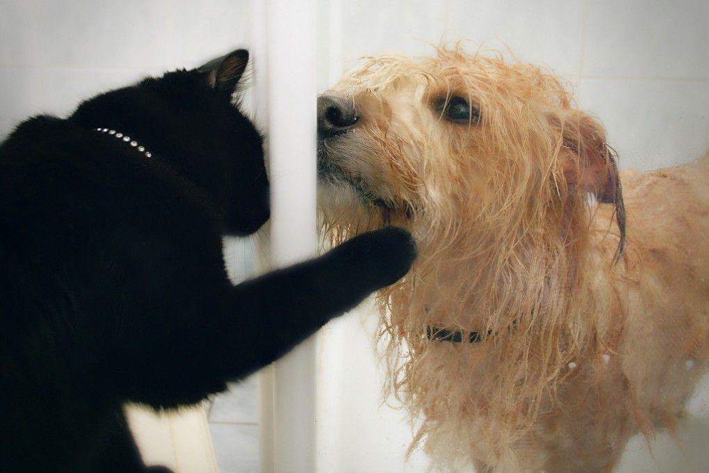 img_perros gatos alimentacion hd