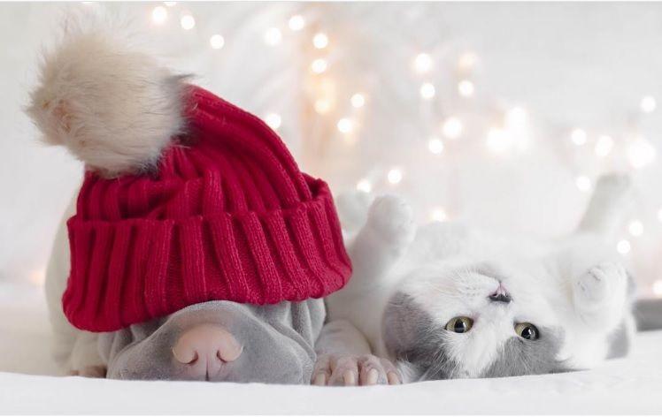 Img perros gatos amigos instagram