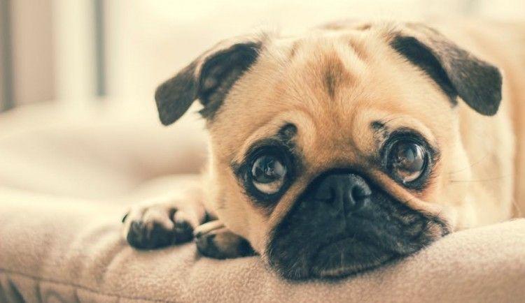 Img perros gatos aspirinas peligros articulo