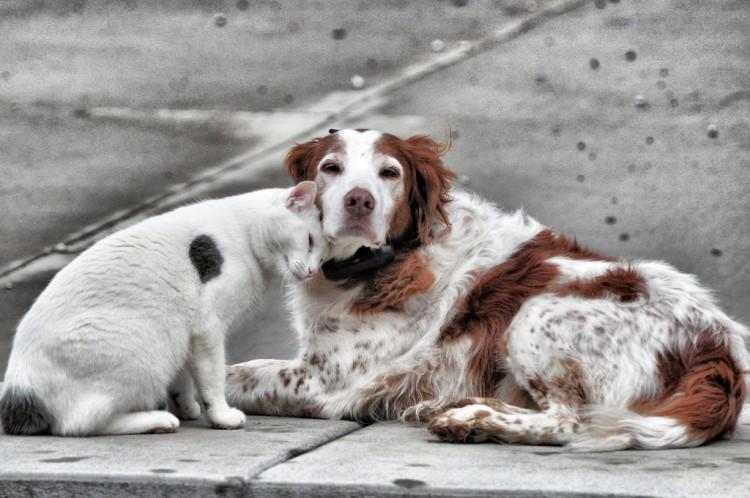 Img perros gatos calle abandono