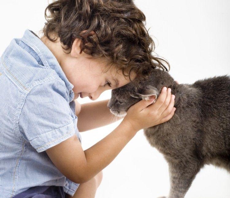 Img perros gatos calman ninos reducen estres1 art