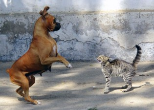 Img perros gatos comunicacion posturas cuerpo corporal lenguaje significado asustados art