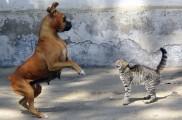 Img perros gatos comunicacion posturas cuerpo corporal lenguaje significado asustados listado