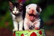 Img perros gatos convivencia amigos consejos listado
