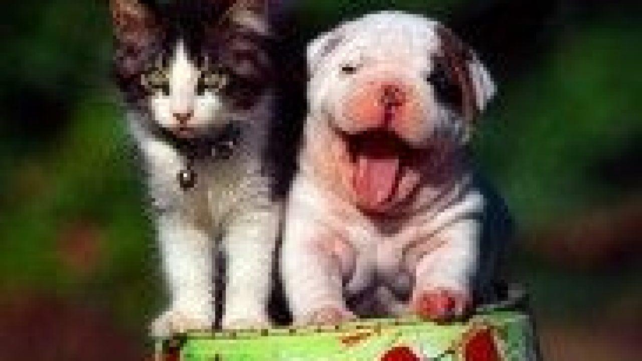 Perros Y Gatos Amigos Pautas Para Conseguirlo Consumer