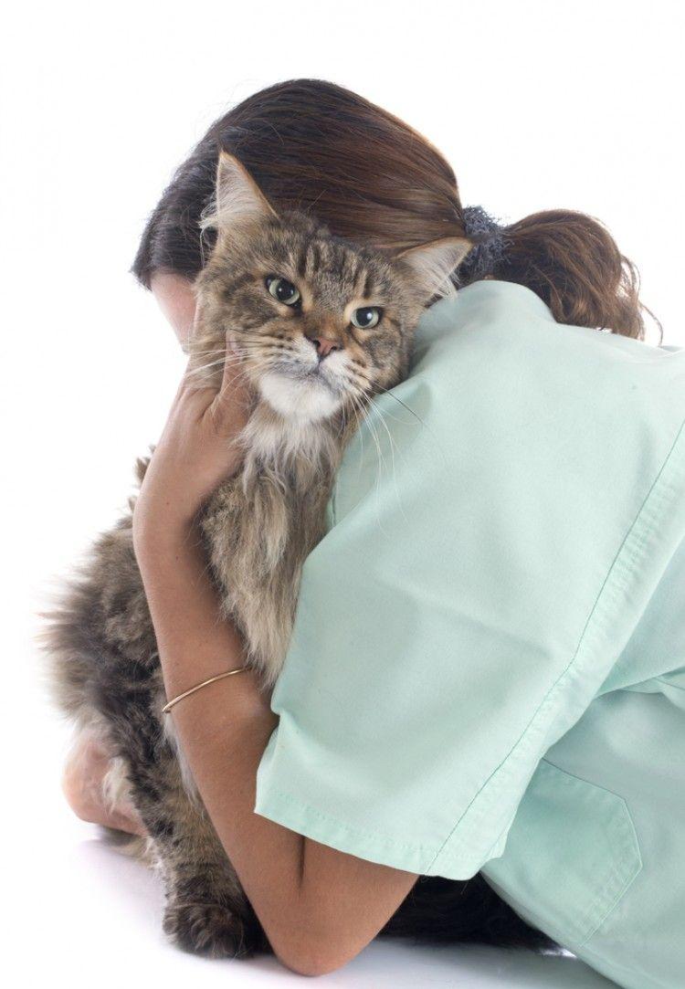 Img perros gatos eutanasia3 art