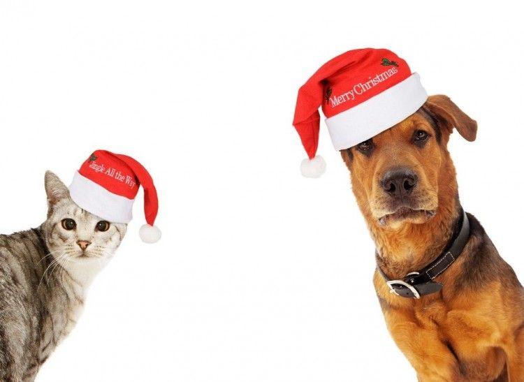 Img perros gatos felicitar navidad videos art