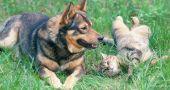 Img perros gatos golpe calor