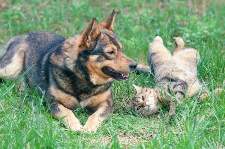 Img perros gatos golpe calor2 art