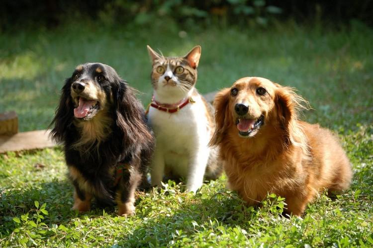 Img perros gatos leishmania