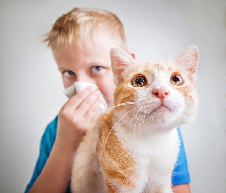 Img perros gatos no dan alergia hipoalergenicos1 art