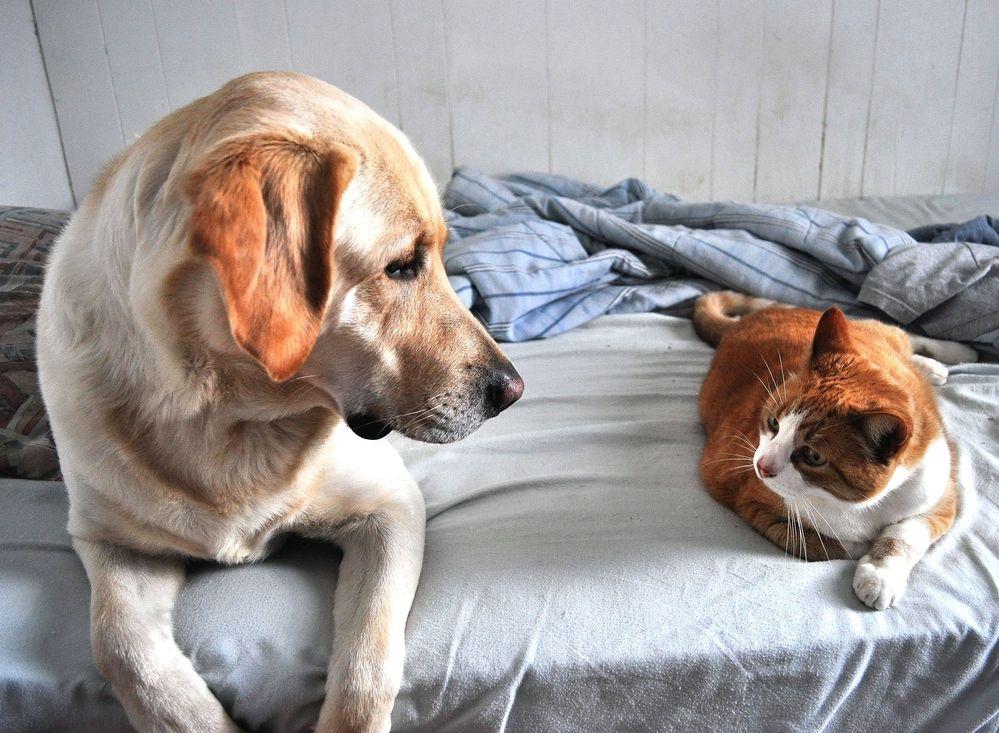 Img perros gatos no dan alergia hipoalergenicos