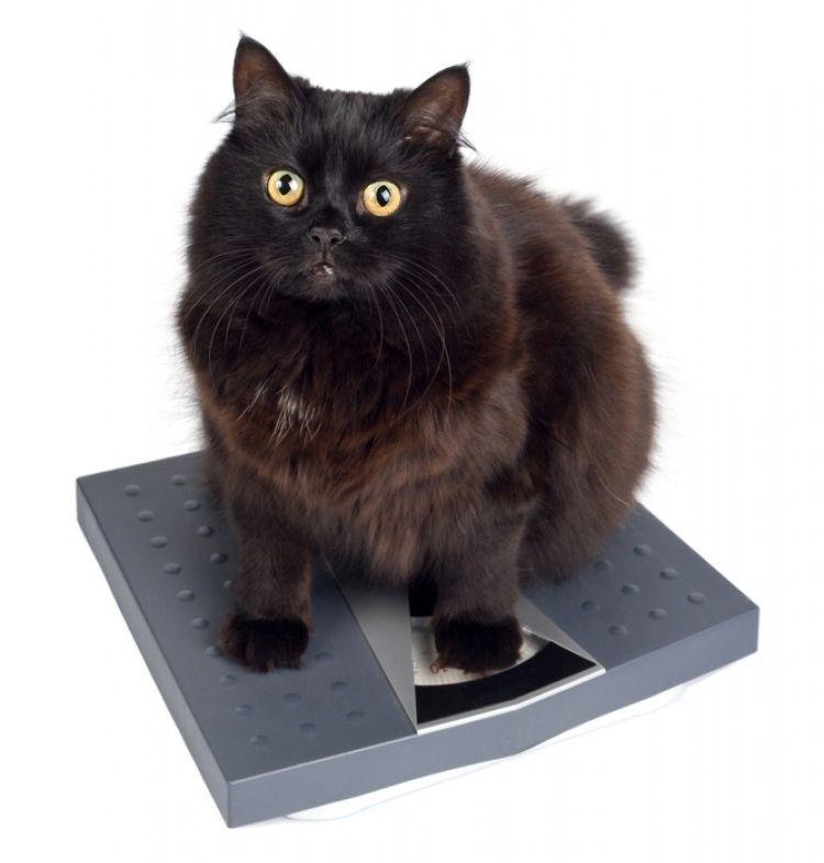 Img perros gatos perdida peso enfermedades2 art