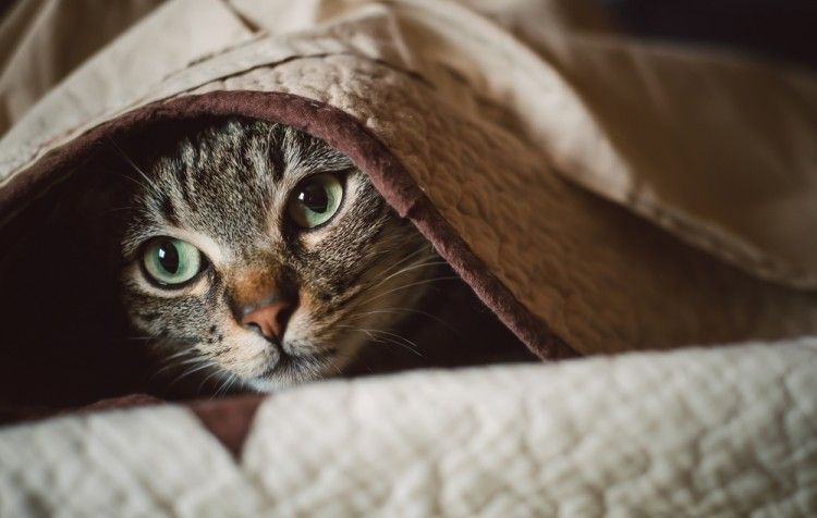 Perdida de peso gatos
