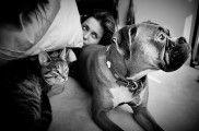 Img perros gatos personas personalidad preferidos animales mascotas listado