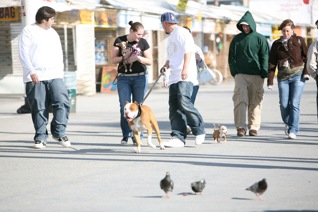 Img perros gente