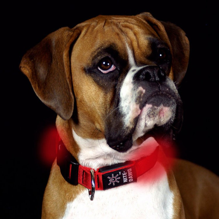Img perros gps veterinario art