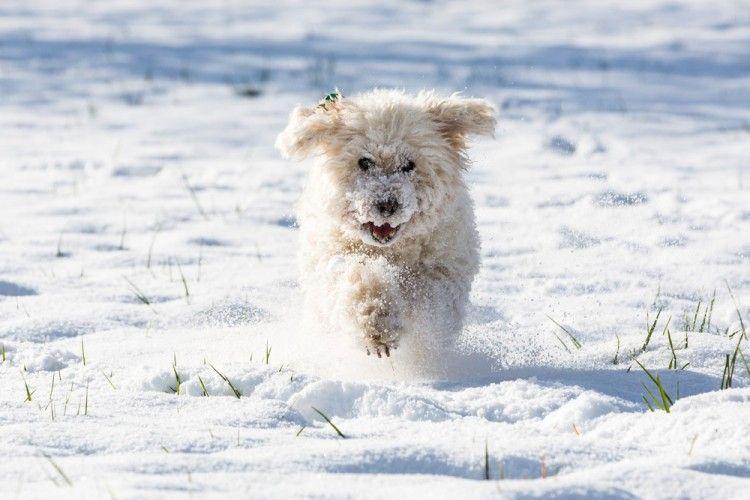 Img perros gusta nieve art