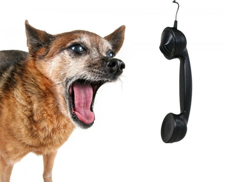 Img perros hablan humanos1 art