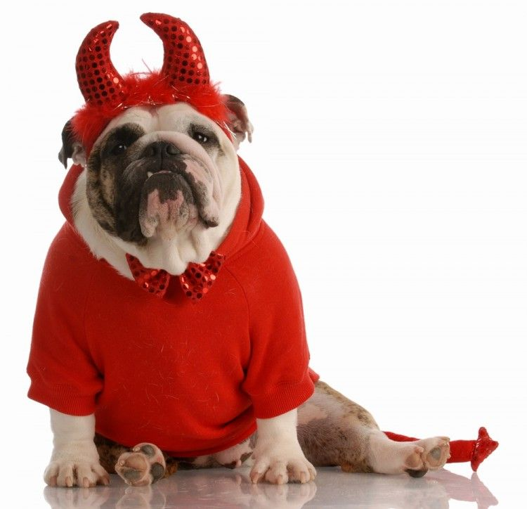 Img perros halloween disfraces art