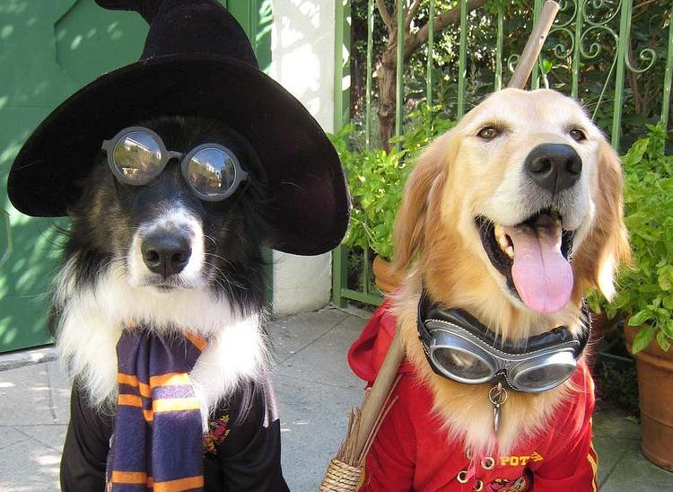 Img perros halloween peligros