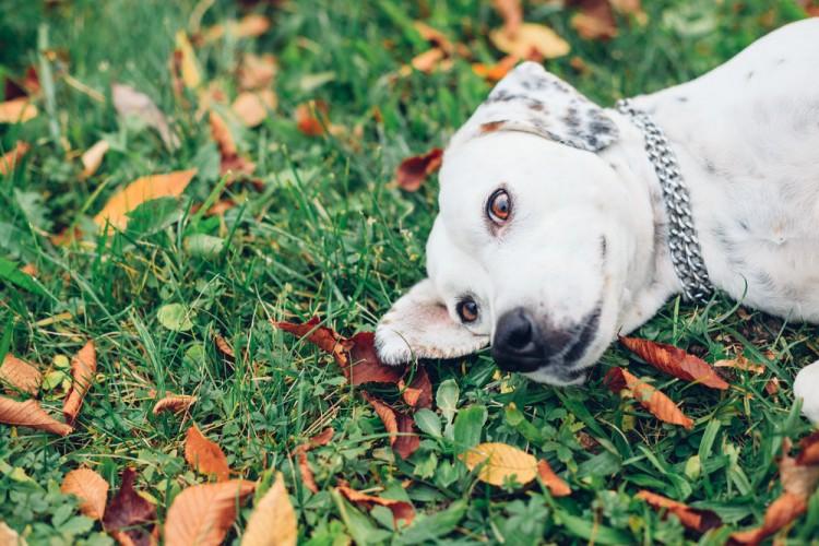 Img perros hierba comer vomitar art