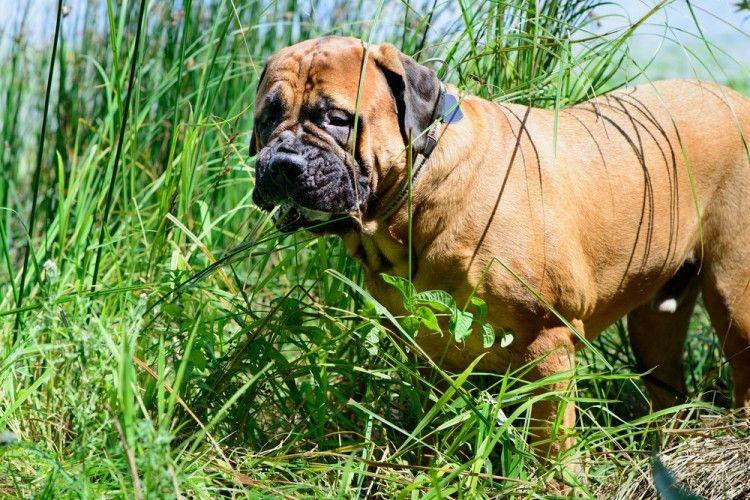 Img perros hierba vomitan art