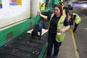 Img perros huelen dineros negros maletas aeropuerto bucan corrupcion animales mascotas crisis art
