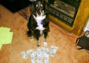Img perros huelen dineros negros maletas aeropuerto corrupcion animales mascotas crisis articulo