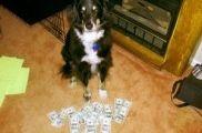 Img perros huelen dineros negros maletas aeropuerto corrupcion animales mascotas crisis listado