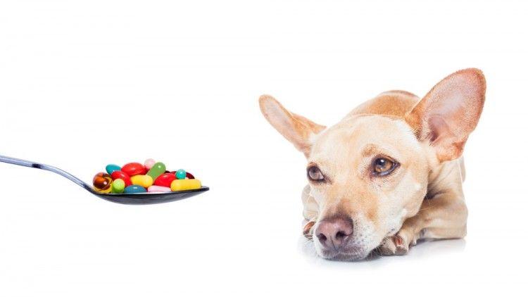 Img perros ibuprofeno gelocatil art