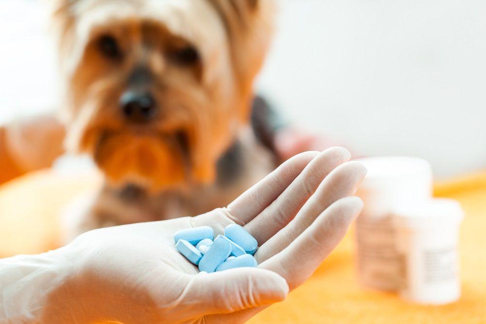 Img perros ibuprofeno