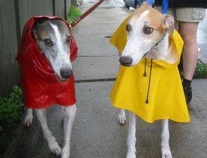 Img perros impermeables ropa lluvia chubasqueros prendas manualidades caseras art