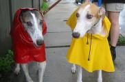 Img perros impermeables ropa lluvia chubasqueros prendas manualidades caseras listado