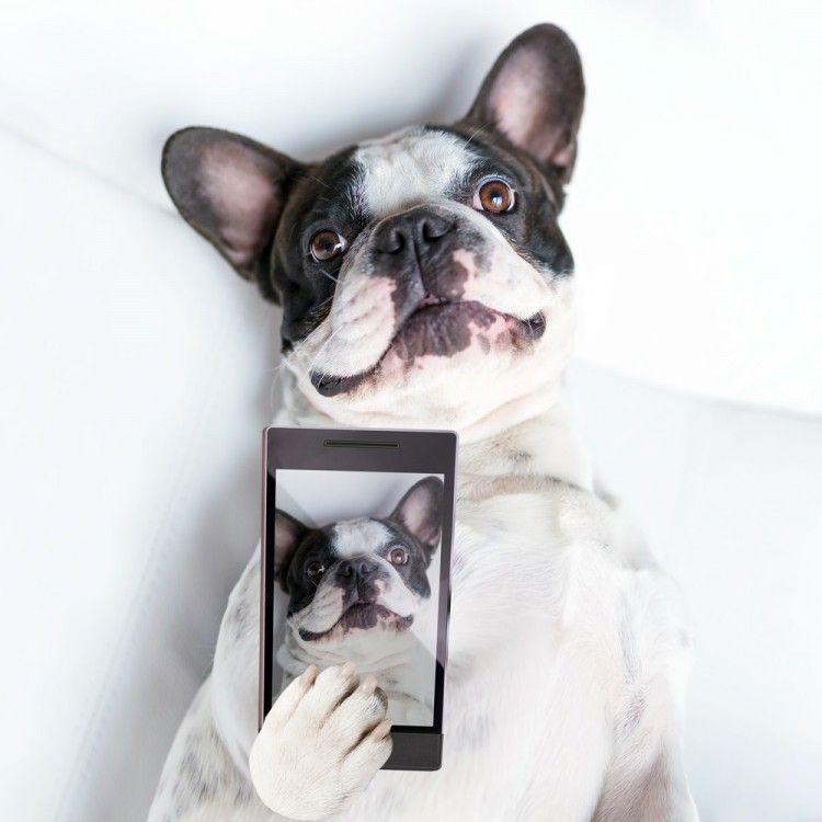 Img perros instagram seguir art