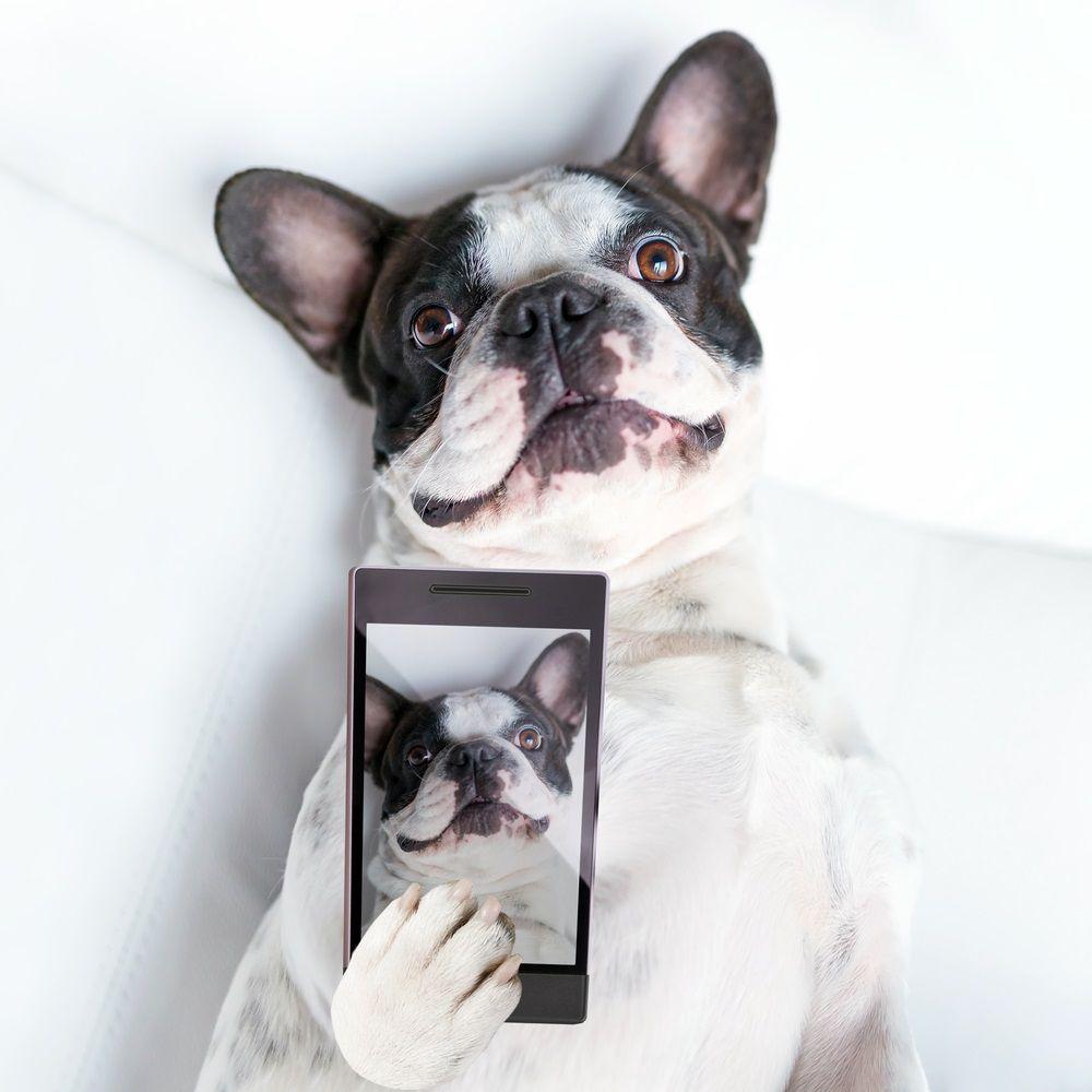 Img perros instagram seguir