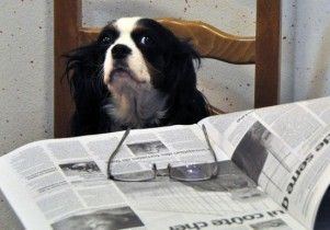 Img perros inteligencia leer entender test numeros art
