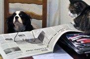 Img perros inteligencia palabras numeros listo gatos lee listado