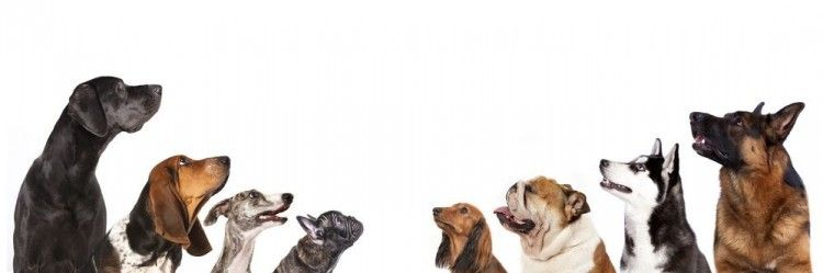 Img perros inteligentes 2 art